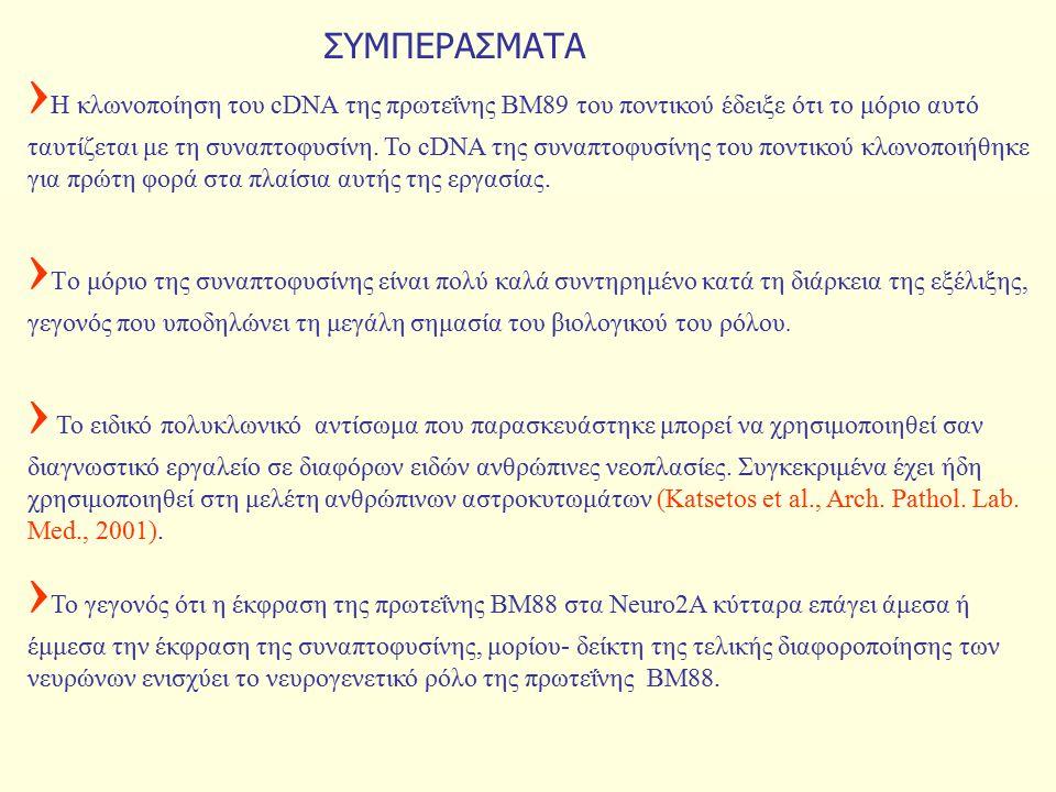 ΣΥΜΠΕΡΑΣΜΑΤΑ › Η κλωνοποίηση του cDNA της πρωτεΐνης ΒΜ89 του ποντικού έδειξε ότι το μόριο αυτό ταυτίζεται με τη συναπτοφυσίνη.