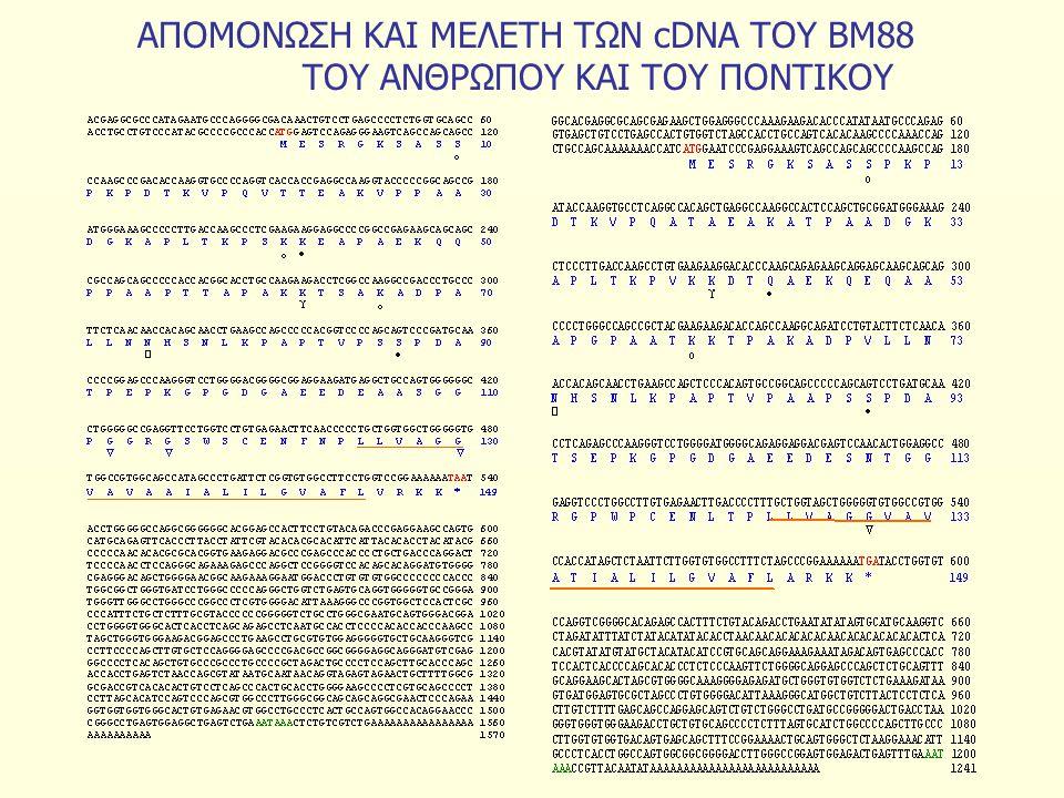 ΑΠΟΜΟΝΩΣΗ ΚΑΙ ΜΕΛΕΤΗ ΤΩΝ cDNA ΤΟΥ ΒΜ88 ΤΟΥ ΑΝΘΡΩΠΟΥ ΚΑΙ ΤΟΥ ΠΟΝΤΙΚΟΥ