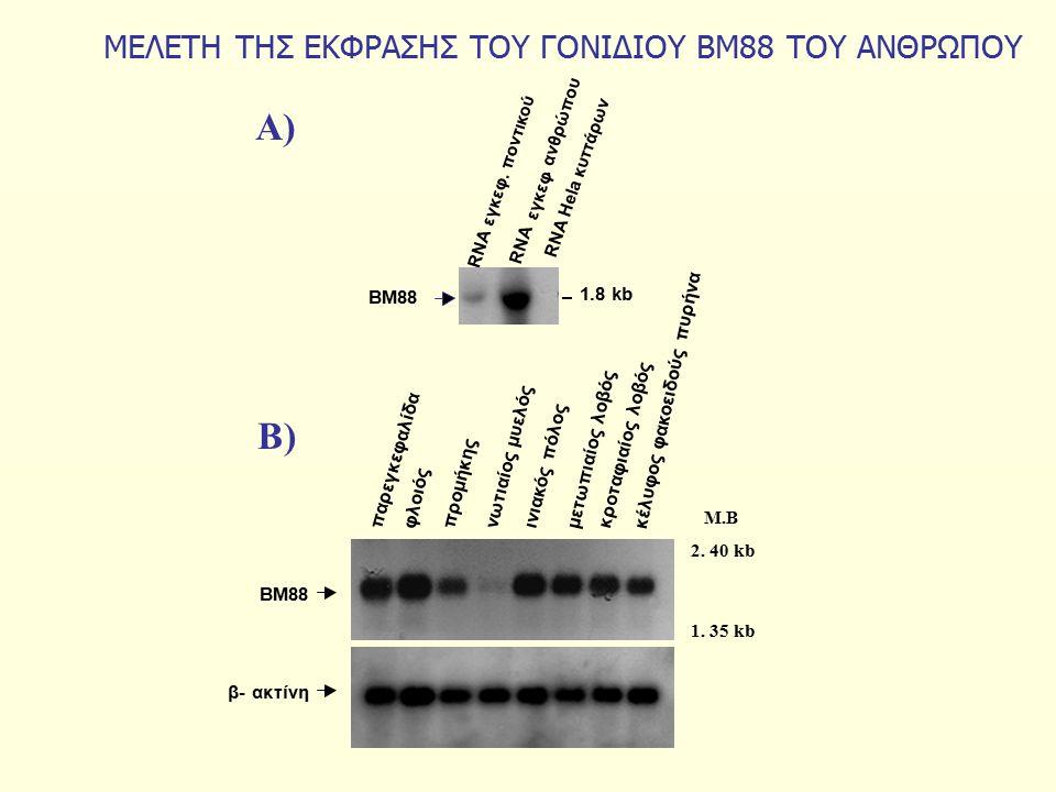 MEΛΕΤΗ ΤΗΣ ΕΚΦΡΑΣΗΣ ΤΟΥ ΓΟΝΙΔΙΟΥ ΒΜ88 ΤΟΥ ΑΝΘΡΩΠΟΥ. ανθρώπου RNA εγκεφ φλοιός παρεγκεφαλίδα προμήκης νωτιαίος μυελός μετωπιαίος λοβός κροταφιαίος λοβό