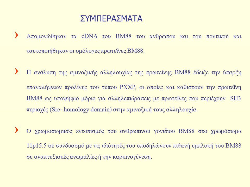 › Απομονώθηκαν τα cDNA του ΒΜ88 του ανθρώπου και του ποντικού και ταυτοποιήθηκαν οι ομόλογες πρωτεΐνες ΒΜ88. › Η ανάλυση της αμινοξικής αλληλουχίας τη