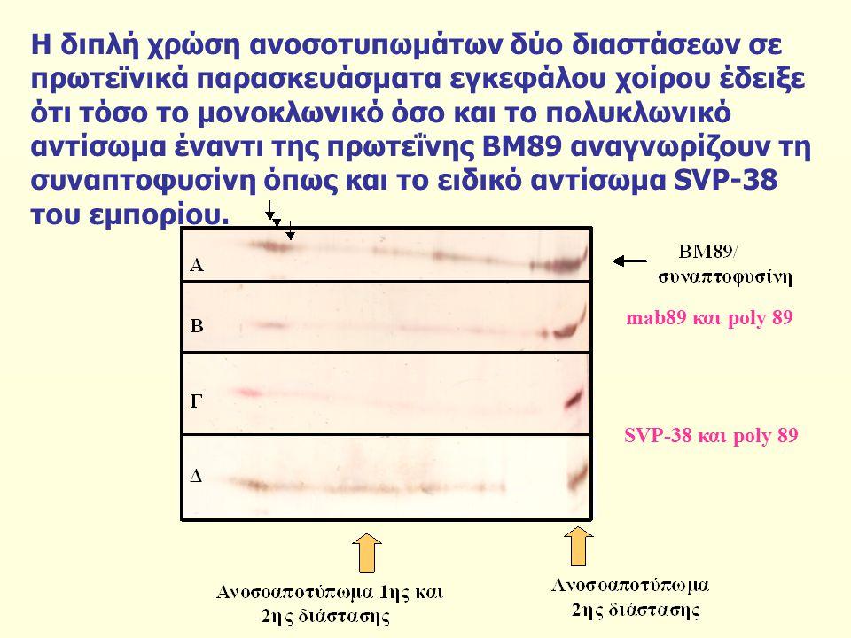 Η διπλή χρώση ανοσοτυπωμάτων δύο διαστάσεων σε πρωτεϊνικά παρασκευάσματα εγκεφάλου χοίρου έδειξε ότι τόσο το μονοκλωνικό όσο και το πολυκλωνικό αντίσωμα έναντι της πρωτεΐνης ΒΜ89 αναγνωρίζουν τη συναπτοφυσίνη όπως και το ειδικό αντίσωμα SVP-38 του εμπορίου.