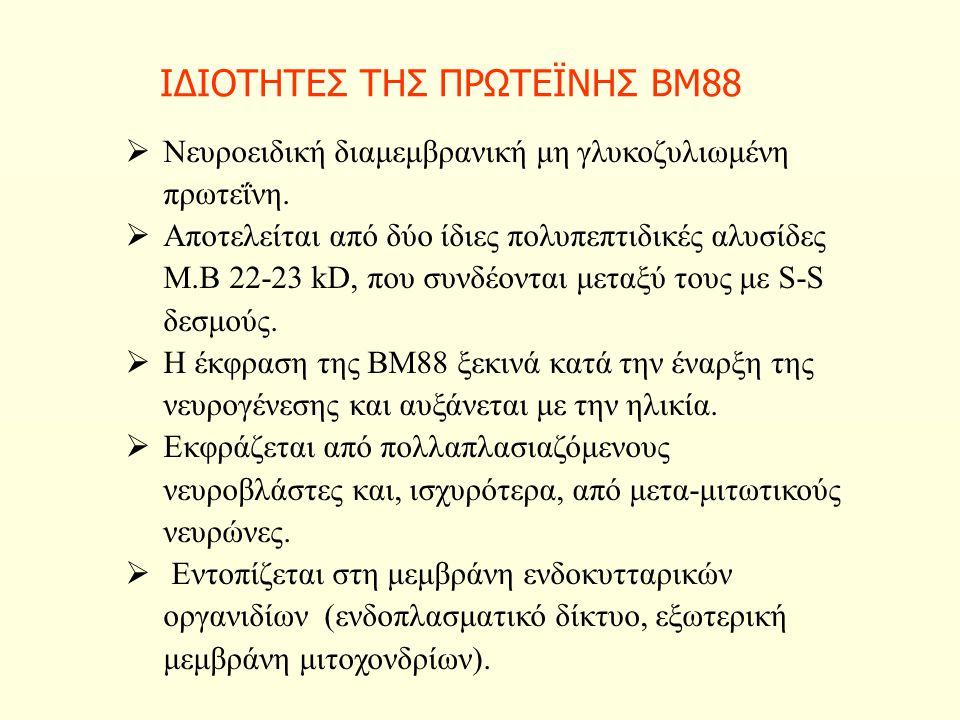 ΙΔΙΟΤΗΤΕΣ ΤΗΣ ΠΡΩΤΕΪΝΗΣ ΒΜ88  Νευροειδική διαμεμβρανική μη γλυκοζυλιωμένη πρωτεΐνη.  Αποτελείται από δύο ίδιες πολυπεπτιδικές αλυσίδες Μ.Β 22-23 kD,