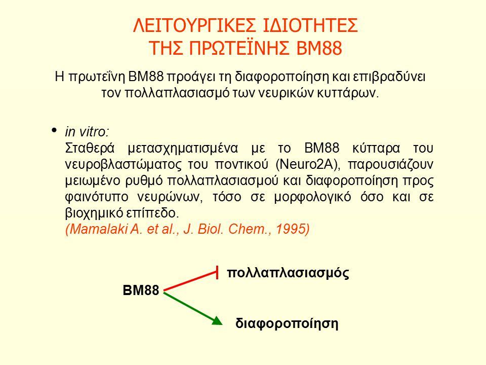 ΛΕΙΤΟΥΡΓΙΚΕΣ ΙΔΙΟΤΗΤΕΣ ΤΗΣ ΠΡΩΤΕΪΝΗΣ ΒΜ88 Η πρωτεΐνη ΒΜ88 προάγει τη διαφοροποίηση και επιβραδύνει τον πολλαπλασιασμό των νευρικών κυττάρων.