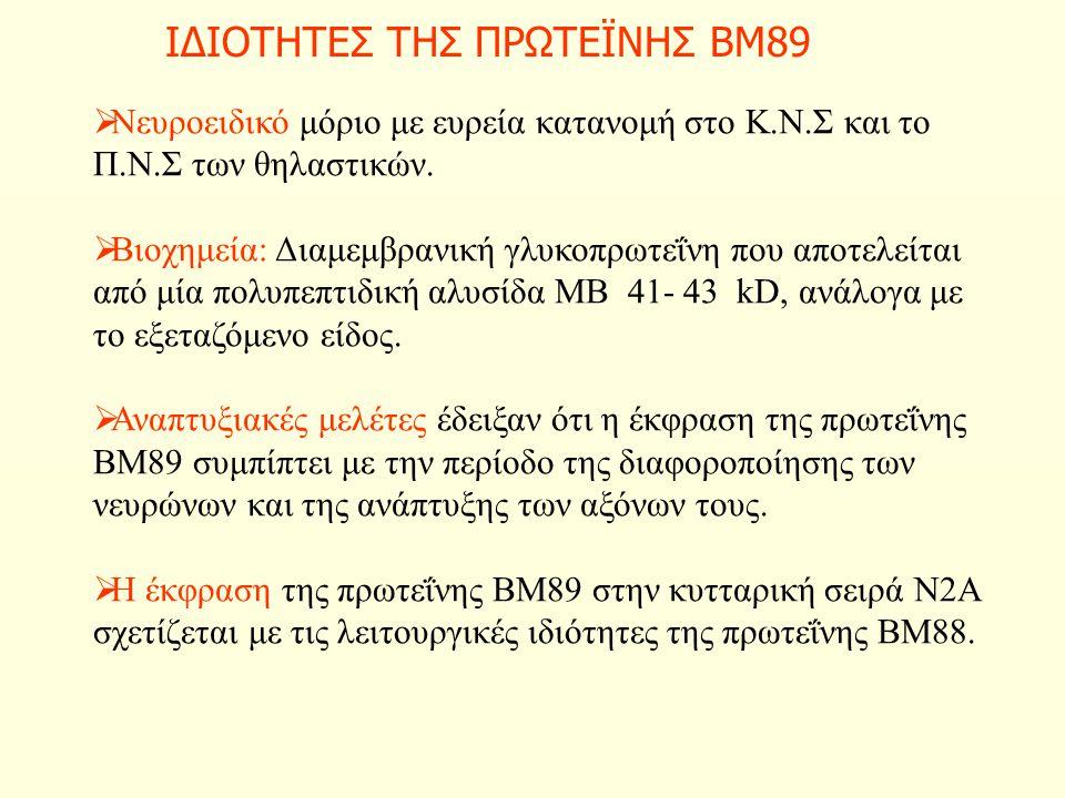ΙΔΙΟΤΗΤΕΣ ΤΗΣ ΠΡΩΤΕΪΝΗΣ ΒΜ89  Νευροειδικό μόριο με ευρεία κατανομή στο Κ.Ν.Σ και το Π.Ν.Σ των θηλαστικών.  Βιοχημεία: Διαμεμβρανική γλυκοπρωτεΐνη πο