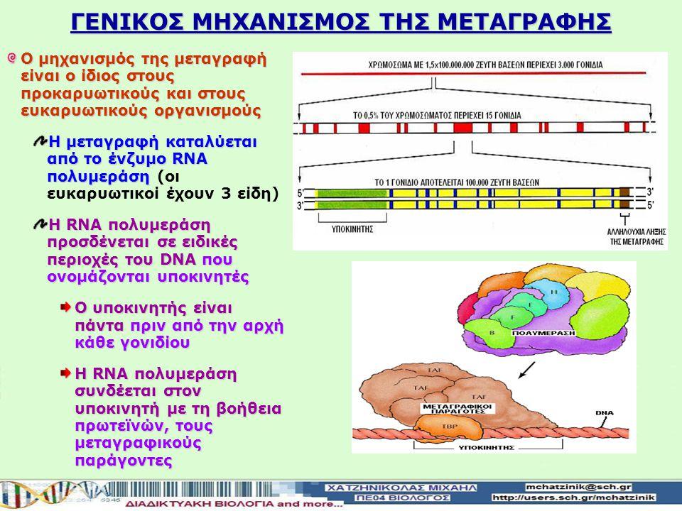 ΓΕΝΙΚΟΣ ΜΗΧΑΝΙΣΜΟΣ ΤΗΣ ΜΕΤΑΓΡΑΦΗΣ Ο μηχανισμός της μεταγραφή είναι ο ίδιος στους προκαρυωτικούς και στους ευκαρυωτικούς οργανισμούς Η μεταγραφή καταλύεται από το ένζυμο RNA πολυμεράση Η μεταγραφή καταλύεται από το ένζυμο RNA πολυμεράση (οι ευκαρυωτικοί έχουν 3 είδη) H RNA πολυμεράση προσδένεται σε ειδικές περιοχές του DNA που ονομάζονται υποκινητές Ο υποκινητής είναι πάνταπριν από την αρχή κάθε γονιδίου Ο υποκινητής είναι πάντα πριν από την αρχή κάθε γονιδίου Η RNA πολυμεράση συνδέεται στον υποκινητή με τη βοήθεια πρωτεϊνών, τους μεταγραφικούς παράγοντες