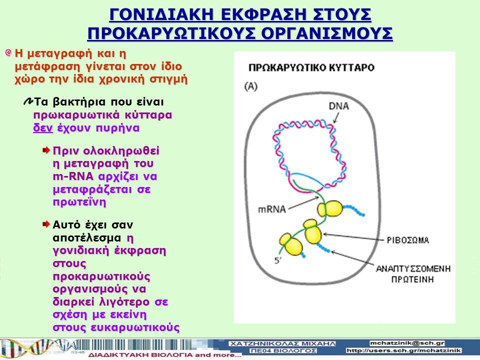 ΤΟ ΜΟΡΙΟ m-RNA ΕΙΝΑΙ ΣΥΜΠΛΗΡΩΜΑΤΙΚΟ ΠΡΟΣ ΤΗ ΜΗ ΚΩΔΙΚΗ ΑΛΥΣΙΔΑ ΤΟΥ DNA TOY ΓΟΝΙΔΙΟΥ