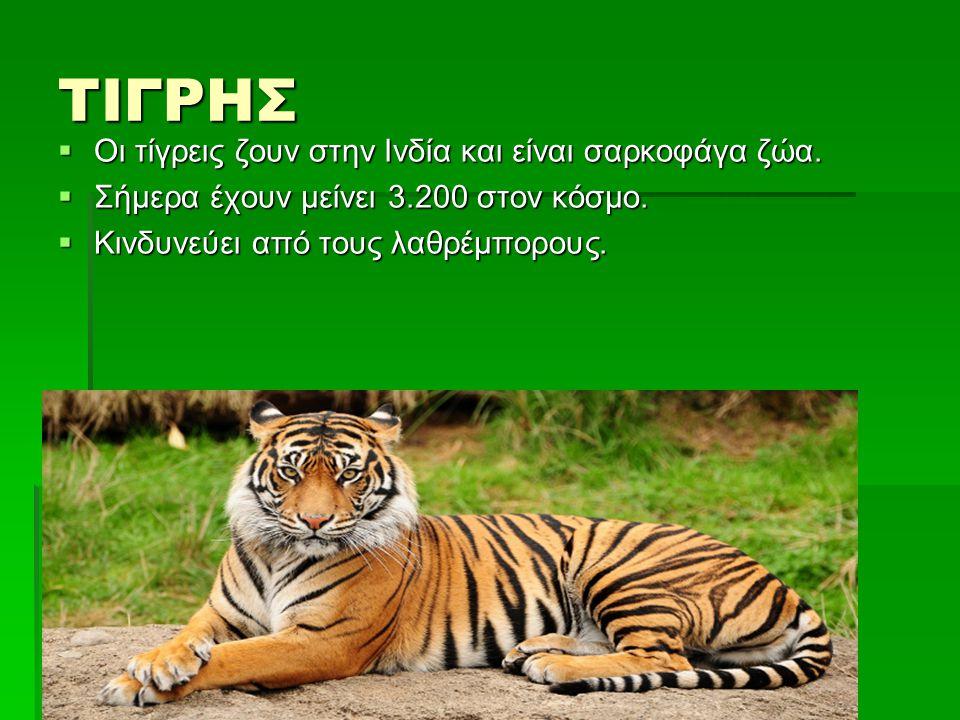 ΤΙΓΡΗΣ  Οι τίγρεις ζουν στην Ινδία και είναι σαρκοφάγα ζώα.  Σήμερα έχουν μείνει 3.200 στον κόσμο.  Κινδυνεύει από τους λαθρέμπορους.