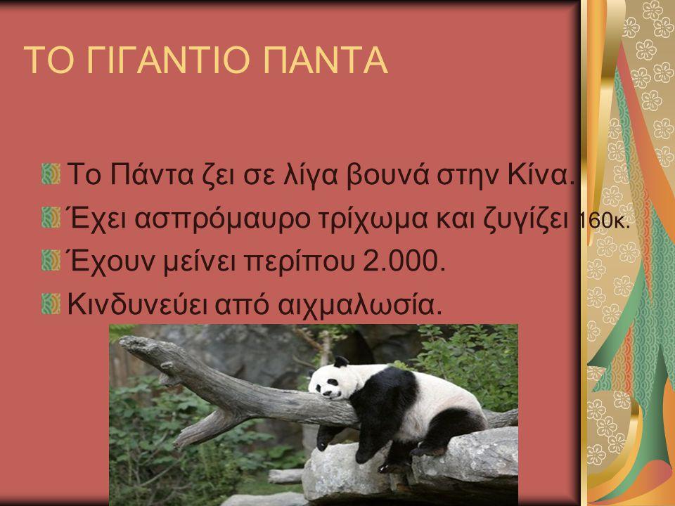 ΤΣΑΚΑΛΙ Το τσακάλι μοιάζει με σκύλο, ζει στην κεντρική Μακεδονία και στον ποταμό Έβρο.