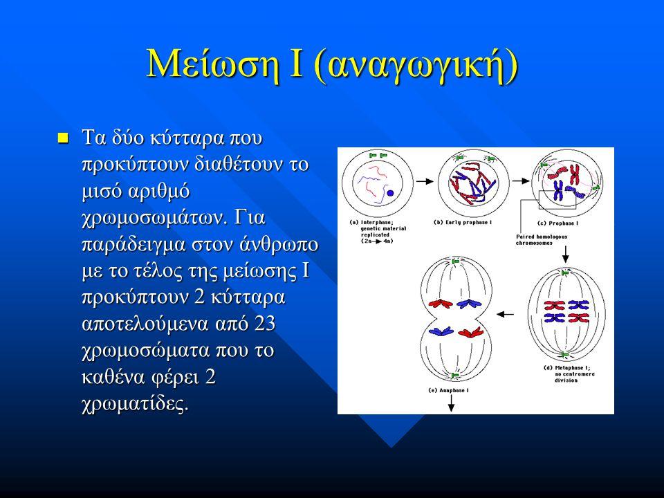 Μείωση Ι (αναγωγική) Τα δύο κύτταρα που προκύπτουν διαθέτουν το μισό αριθμό χρωμοσωμάτων. Για παράδειγμα στον άνθρωπο με το τέλος της μείωσης Ι προκύπ