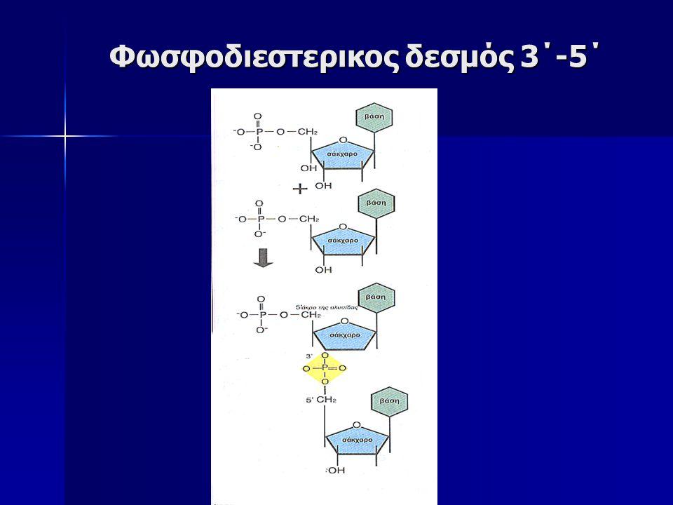 DNA RNA Νουκλεοτίδια