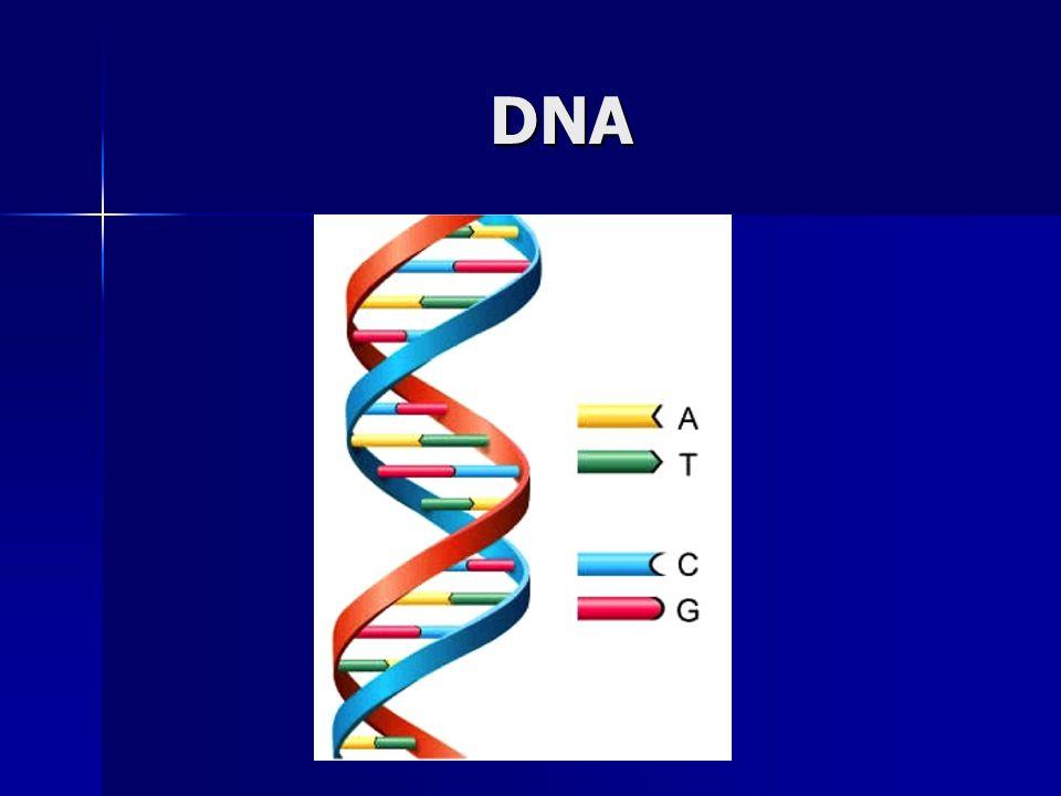 Επιμύκυνση DNA αλυσίδας με κατεύθυνση 5΄-3΄