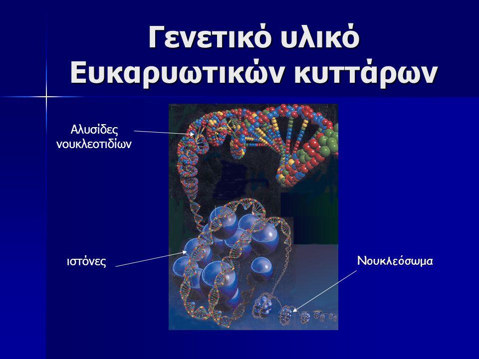 Σύζευξη βακτηρίων για την ανταλλαγή γενετικού υλικού