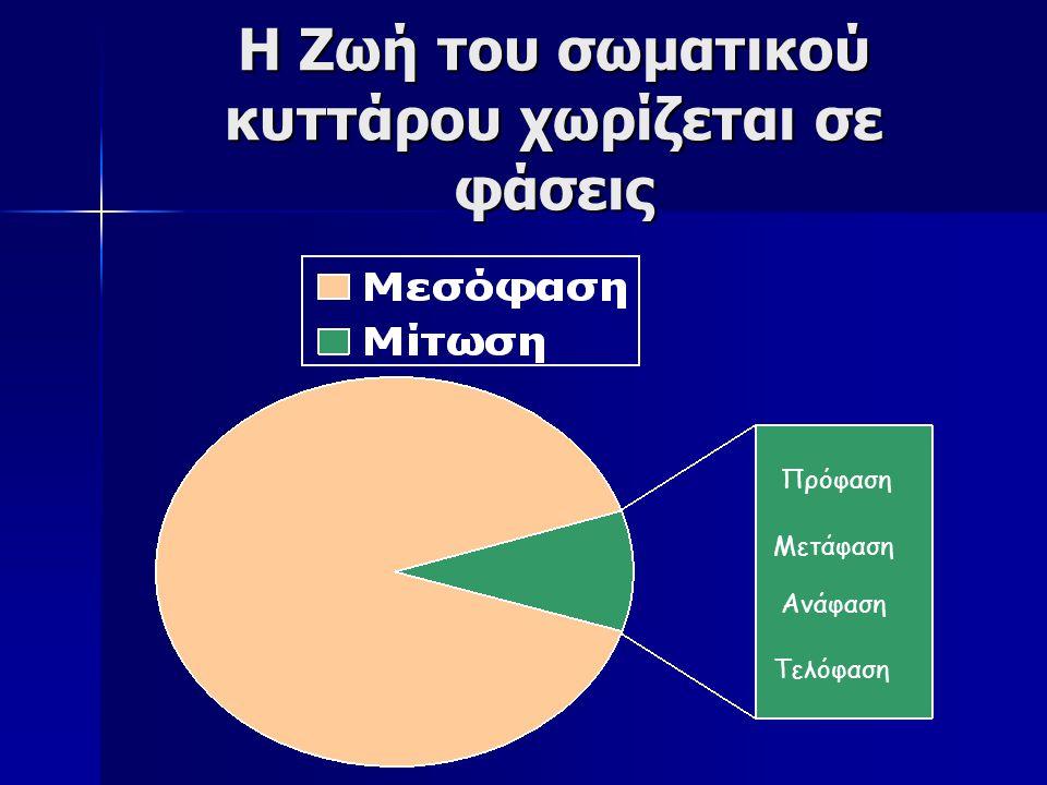 Τα χρωμοσώματα στους ανώτερους ευκαρυωτικούς οργανισμούς βρίσκονται σε ζευγάρια, τα ομόλογα χρωμοσώματα