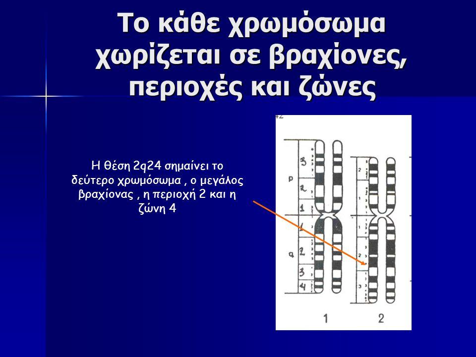 Καρυότυπος Εξαγωγή συμπερασμάτων από την δημιουργία ενός καρυότυπου Εξαγωγή συμπερασμάτων από την δημιουργία ενός καρυότυπου 1) το είδος του οργανισμού 2) Το φύλο 3) χρωμοσωμική ανωμαλία