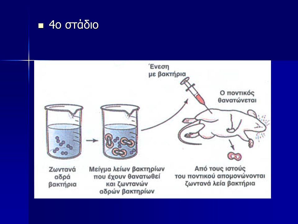 Το κάθε χρωμόσωμα χωρίζεται σε βραχίονες, περιοχές και ζώνες Η θέση 2q24 σημαίνει το δεύτερο χρωμόσωμα, ο μεγάλος βραχίονας, η περιοχή 2 και η ζώνη 4