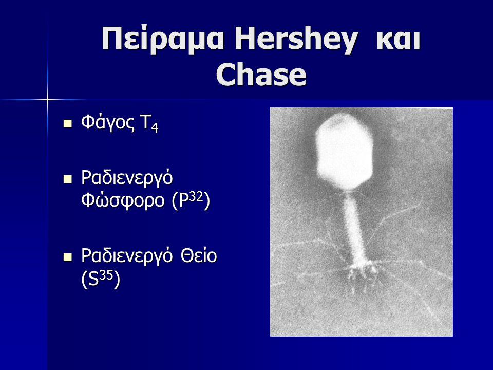 Πείραμα Hershey και Chase Φάγος Τ 4 Φάγος Τ 4 Ραδιενεργό Φώσφορο (P 32 ) Ραδιενεργό Φώσφορο (P 32 ) Ραδιενεργό Θείο (S 35 ) Ραδιενεργό Θείο (S 35 )