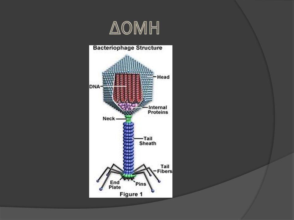 Οι βακτηριοφάγοι μπορούν να αναπαραχθούν με δυο εναλλακτικούς μηχανισμούς : Λυτικός κύκλος Λυσιγονικός κύκλος