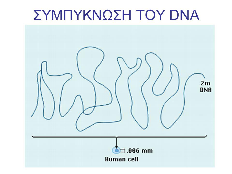 ΣΥΜΠΥΚΝΩΣΗ ΤΟΥ DNA
