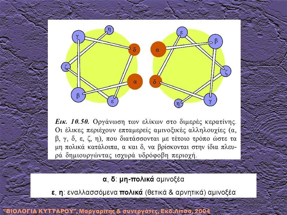 α, δ: μη-πολικά αμινοξέα ε, η: εναλλασσόμενα πολικά (θετικά & αρνητικά) αμινοξέα