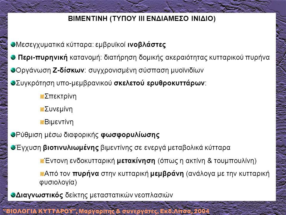 ΒΙΜΕΝΤΙΝΗ (ΤΥΠΟΥ ΙΙΙ ΕΝΔΙΑΜΕΣΟ ΙΝΙΔΙΟ) Μεσεγχυματικά κύτταρα: εμβρυϊκοί ινοβλάστες Περι-πυρηνική κατανομή: διατήρηση δομικής ακεραιότητας κυτταρικού πυρήνα Οργάνωση Z-δίσκων: συγχρονισμένη σύσπαση μυοϊνιδίων Συγκρότηση υπο-μεμβρανικού σκελετού ερυθροκυττάρων: Σπεκτρίνη Συνεμίνη Βιμεντίνη Ρύθμιση μέσω διαφορικής φωσφορυλίωσης Έγχυση βιοτινυλιωμένης βιμεντίνης σε ενεργά μεταβολικά κύτταρα Έντονη ενδοκυτταρική μετακίνηση (όπως η ακτίνη & τουμπουλίνη) Από τον πυρήνα στην κυτταρική μεμβράνη (ανάλογα με την κυτταρική φυσιολογία) Διαγνωστικός δείκτης μεταστατικών νεοπλασιών