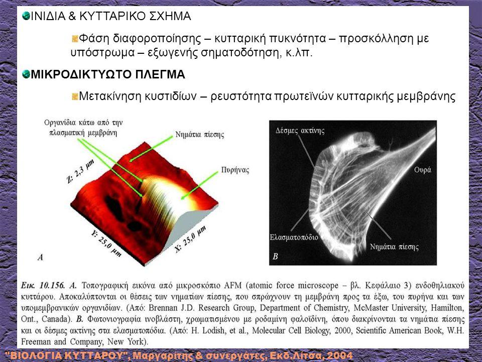 ΒΙΟΛΟΓΙΑ ΚΥΤΤΑΡΟΥ , Μαργαρίτης & συνεργάτες, Εκδ.Λίτσα, 2004 ΙΝΙΔΙΑ & ΚΥΤΤΑΡΙΚΟ ΣΧΗΜΑ Φάση διαφοροποίησης – κυτταρική πυκνότητα – προσκόλληση με υπόστρωμα – εξωγενής σηματοδότηση, κ.λπ.