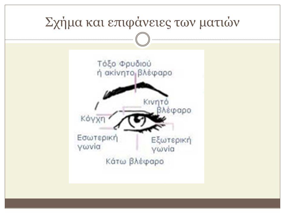 Ονομασίες σημείων και επιφανειών Εσωτερική γωνία (έσω κανθός) Είναι η γωνία του ματιού που βρίσκεται πιο κοντά στη μύτη.