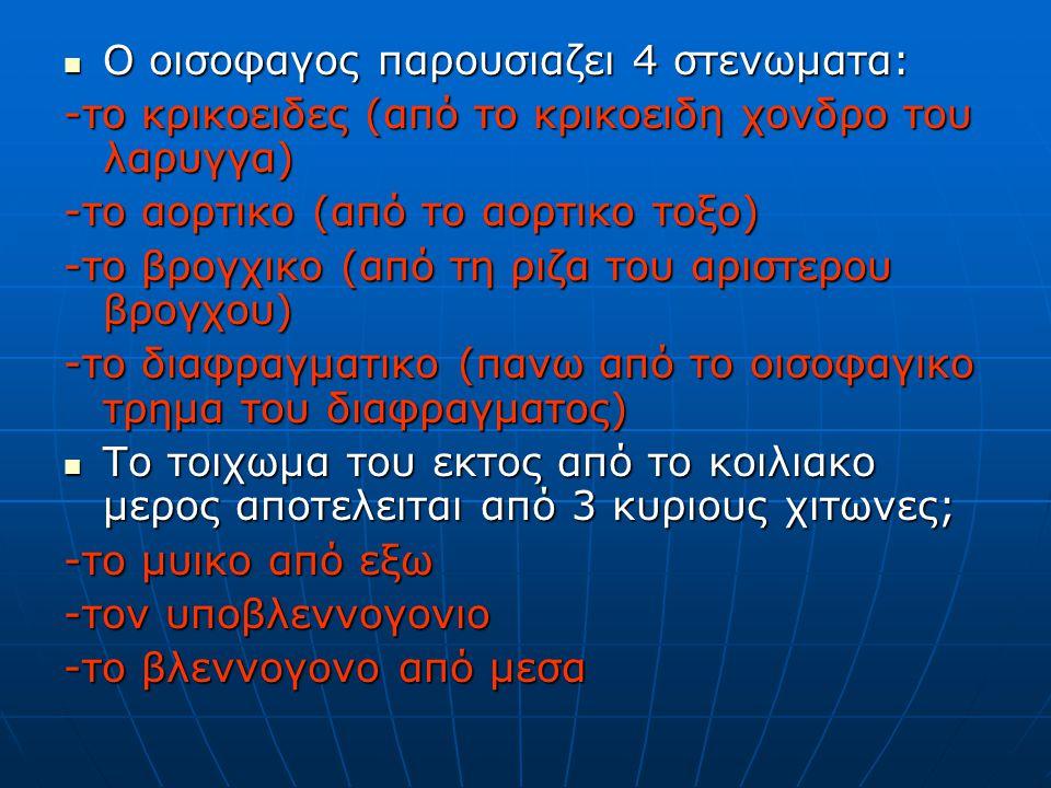 Ο οισοφαγος παρουσιαζει 4 στενωματα: Ο οισοφαγος παρουσιαζει 4 στενωματα: -το κρικοειδες (από το κρικοειδη χονδρο του λαρυγγα) -το αορτικο (από το αορτικο τοξο) -το βρογχικο (από τη ριζα του αριστερου βρογχου) -το διαφραγματικο (πανω από το οισοφαγικο τρημα του διαφραγματος) Το τοιχωμα του εκτος από το κοιλιακο μερος αποτελειται από 3 κυριους χιτωνες; Το τοιχωμα του εκτος από το κοιλιακο μερος αποτελειται από 3 κυριους χιτωνες; -το μυικο από εξω -τον υποβλεννογονιο -το βλεννογονο από μεσα