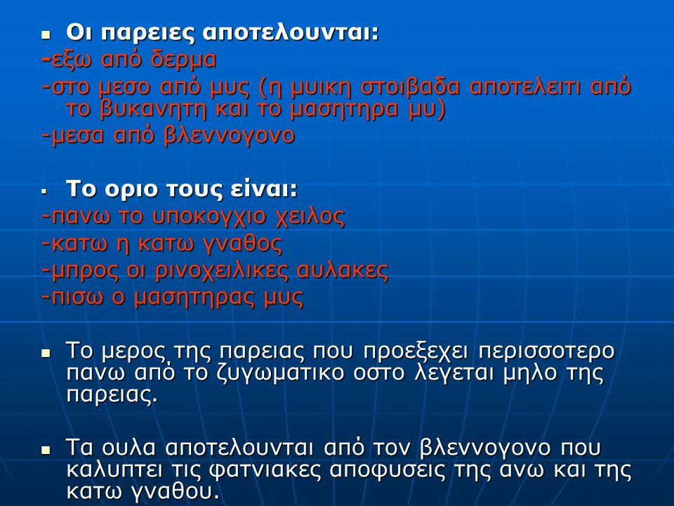 Οι παρειες αποτελουνται: Οι παρειες αποτελουνται: -εξω από δερμα -στο μεσο από μυς (η μυικη στοιβαδα αποτελειτι από το βυκανητη και το μασητηρα μυ) -μεσα από βλεννογονο  Το οριο τους είναι: -πανω το υποκογχιο χειλος -κατω η κατω γναθος -μπρος οι ρινοχειλικες αυλακες -πισω ο μασητηρας μυς Το μερος της παρειας που προεξεχει περισσοτερο πανω από το ζυγωματικο οστο λεγεται μηλο της παρειας.