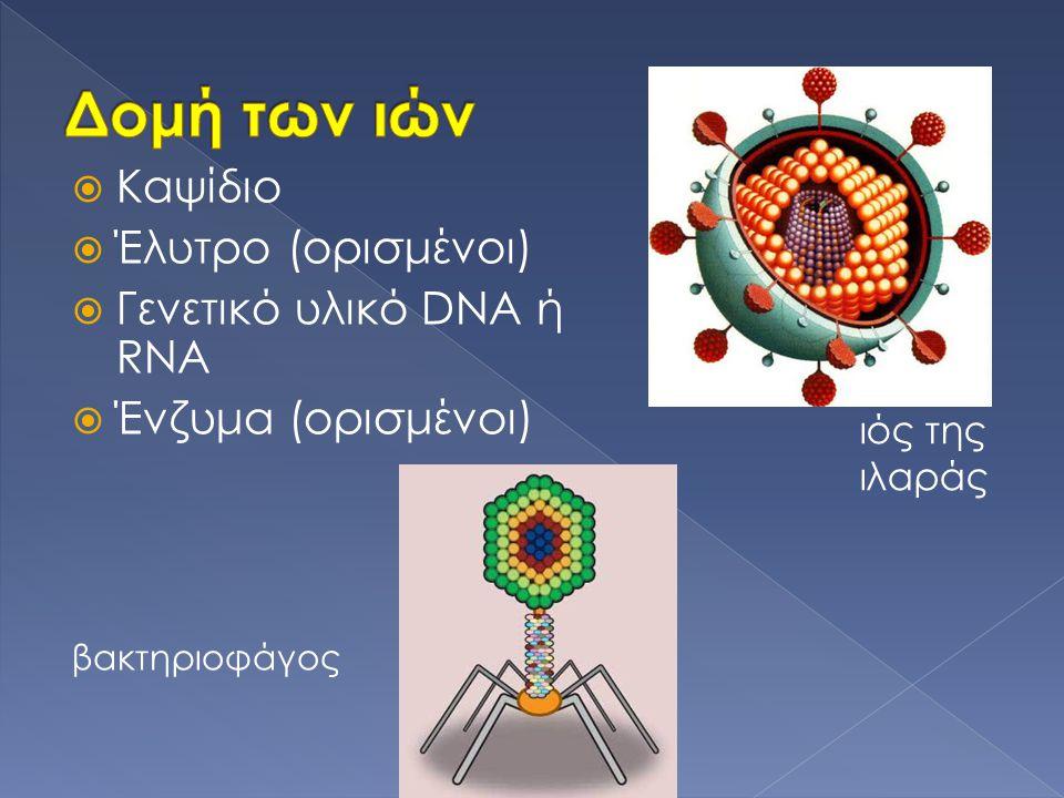  Καψίδιο  Έλυτρο (ορισμένοι)  Γενετικό υλικό DNA ή RNA  Ένζυμα (ορισμένοι) βακτηριοφάγος ιός της ιλαράς
