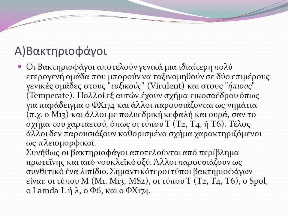 Α)Βακτηριοφάγοι Οι Βακτηριοφάγοι αποτελούν γενικά μια ιδιαίτερη πολύ ετερογενή ομάδα που μπορούν να ταξινομηθούν σε δύο επιμέρους γενικές ομάδες στους τοξικούς (Virulent) και στους ήπιους (Temperate).