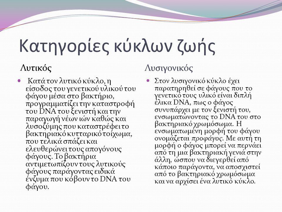 Κατηγορίες κύκλων ζωής Λυτικός Λυσιγονικός Κατά τον λυτικό κύκλο, η είσοδος του γενετικού υλικού του φάγου μέσα στο βακτήριο, προγραμματίζει την καταστροφή του DNA του ξενιστή και την παραγωγή νέων ιών καθώς και λυσοζύμης που καταστρέφει το βακτηριακό κυτταρικό τοίχωμα, που τελικά σπάζει και ελευθερώνει τους απογόνους φάγους.