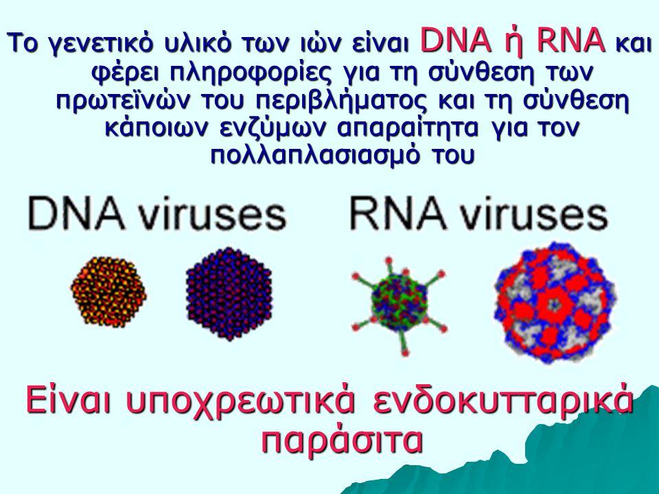 Το γενετικό υλικό των ιών είναι DNA ή RNA και φέρει πληροφορίες για τη σύνθεση των πρωτεϊνών του περιβλήματος και τη σύνθεση κάποιων ενζύμων απαραίτητα για τον πολλαπλασιασμό του Είναι υποχρεωτικά ενδοκυτταρικά παράσιτα