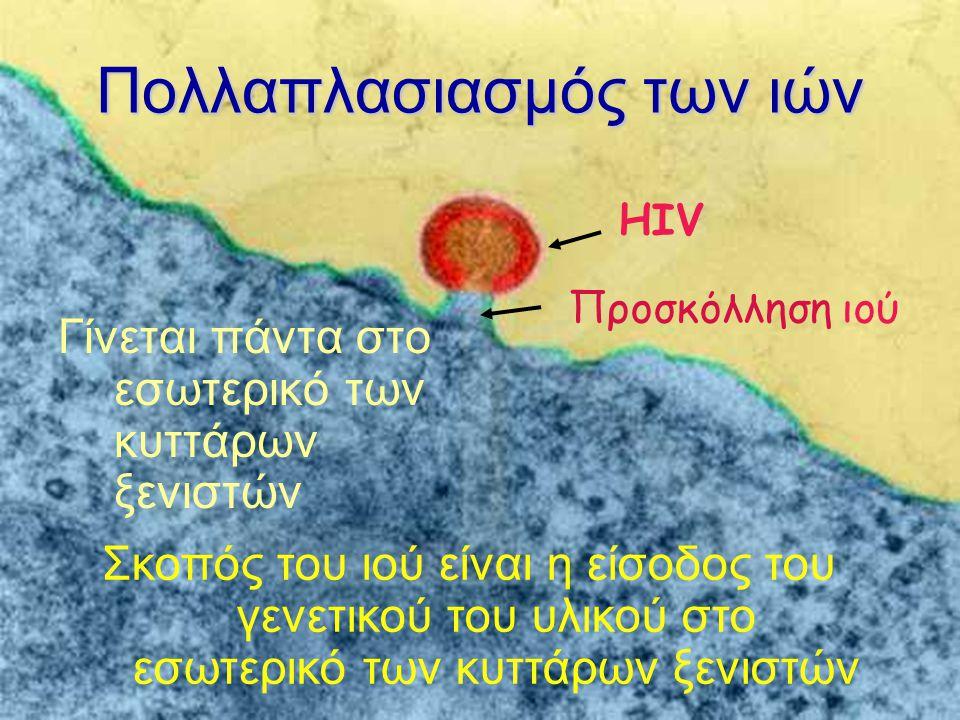 Πολλαπλασιασμός των ιών Γίνεται πάντα στο εσωτερικό των κυττάρων ξενιστών HIV Προσκόλληση ιού Σκοπός του ιού είναι η είσοδος του γενετικού του υλικού στο εσωτερικό των κυττάρων ξενιστών