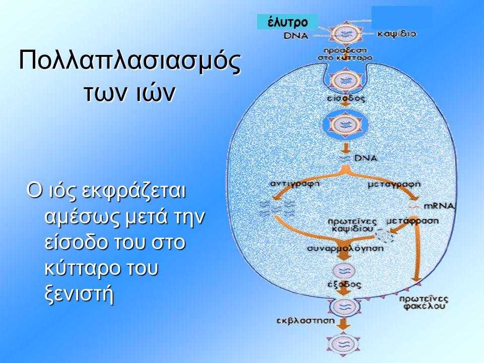 έλυτρο Πολλαπλασιασμός των ιών Ο ιός εκφράζεται αμέσως μετά την είσοδο του στο κύτταρο του ξενιστή