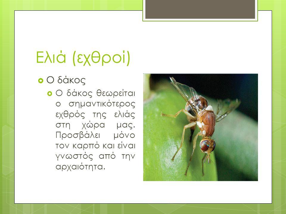 Βιβλιογραφία  http://www.olivion.gr/el/food-and-trips-2/photos-and-video http://www.olivion.gr/el/food-and-trips-2/photos-and-video  http://www.aua.gr/roussos/Roussos/pdf/Printing%20Lessons /Olive.pdf http://www.aua.gr/roussos/Roussos/pdf/Printing%20Lessons /Olive.pdf  http://estia.hua.gr:8080/dspace/bitstream/123456789/205/1 /Ptychiaki7.pdf http://estia.hua.gr:8080/dspace/bitstream/123456789/205/1 /Ptychiaki7.pdf  http://www.ebloko.gr/files/pdf/ladi_elia.PDF http://www.ebloko.gr/files/pdf/ladi_elia.PDF  http://agrinfo.innovationcenter- crete.gr/index.php?option=com_content&view=article&Ite mid=2&id=58:dakos-elias http://agrinfo.innovationcenter- crete.gr/index.php?option=com_content&view=article&Ite mid=2&id=58:dakos-elias  http://agrinfo.innovationcenter- crete.gr/index.php?option=com_content&view=article&Ite mid=2&id=70:pyrinotriti-elias http://agrinfo.innovationcenter- crete.gr/index.php?option=com_content&view=article&Ite mid=2&id=70:pyrinotriti-elias  www.elies-ladikalamatiano.grwww.elies-ladikalamatiano.gr