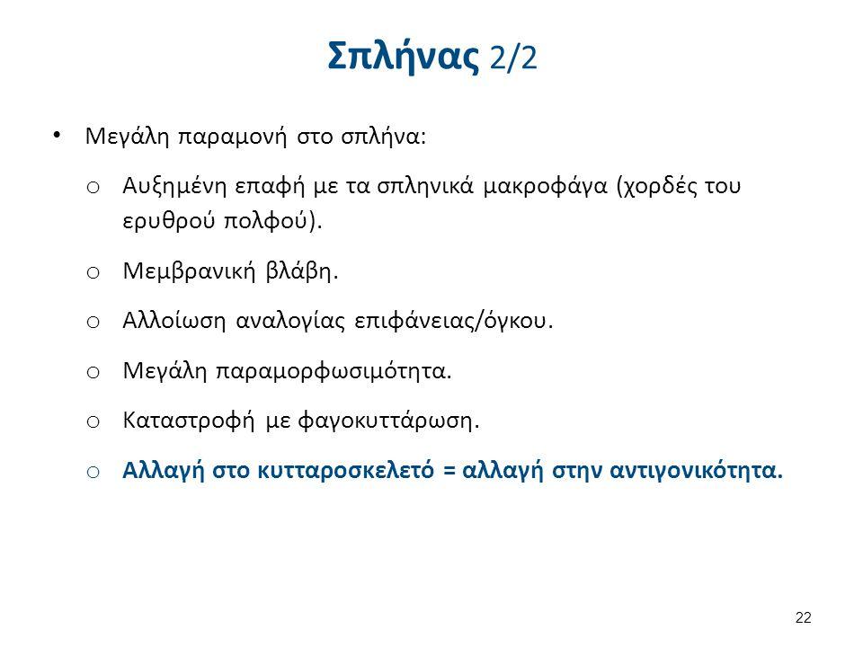 Σπλήνας 2/2 Μεγάλη παραμονή στο σπλήνα: o Αυξημένη επαφή με τα σπληνικά μακροφάγα (χορδές του ερυθρού πολφού). o Μεμβρανική βλάβη. o Αλλοίωση αναλογία