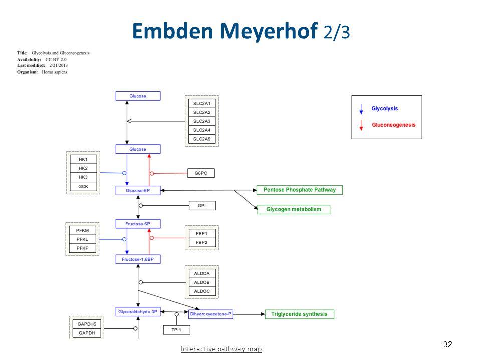 Embden Meyerhof 2/3 32 Interactive pathway map