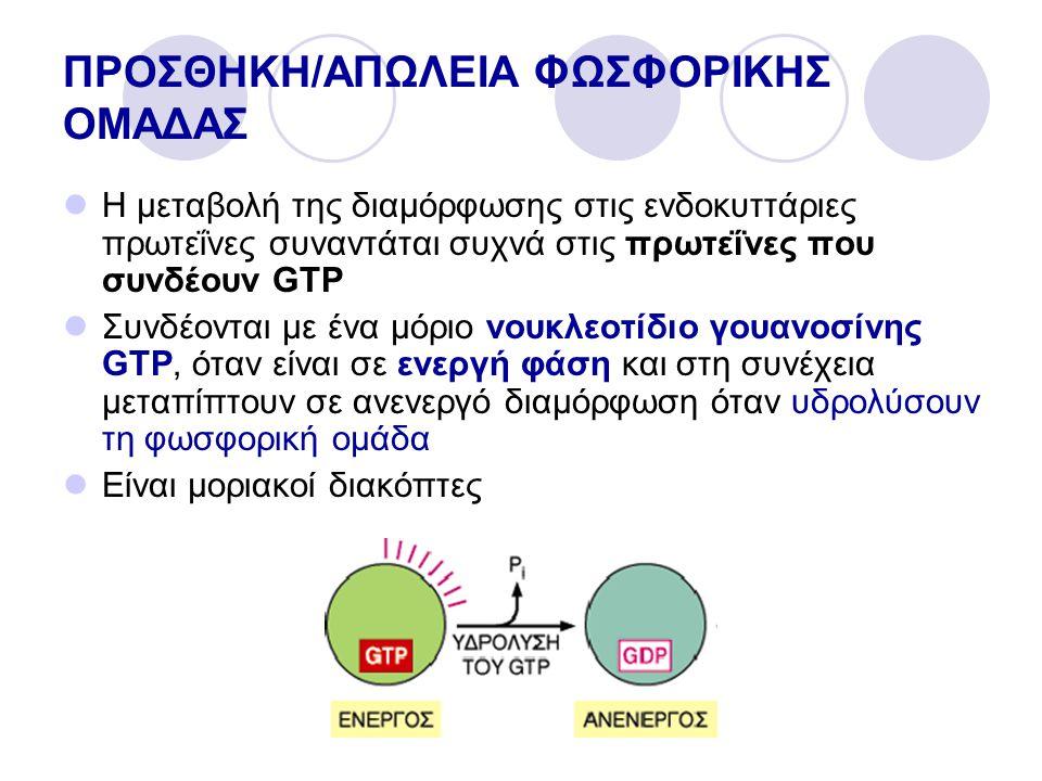 ΠΡΟΣΘΗΚΗ/ΑΠΩΛΕΙΑ ΦΩΣΦΟΡΙΚΗΣ ΟΜΑΔΑΣ Η μεταβολή της διαμόρφωσης στις ενδοκυττάριες πρωτεΐνες συναντάται συχνά στις πρωτεΐνες που συνδέουν GTP Συνδέονται