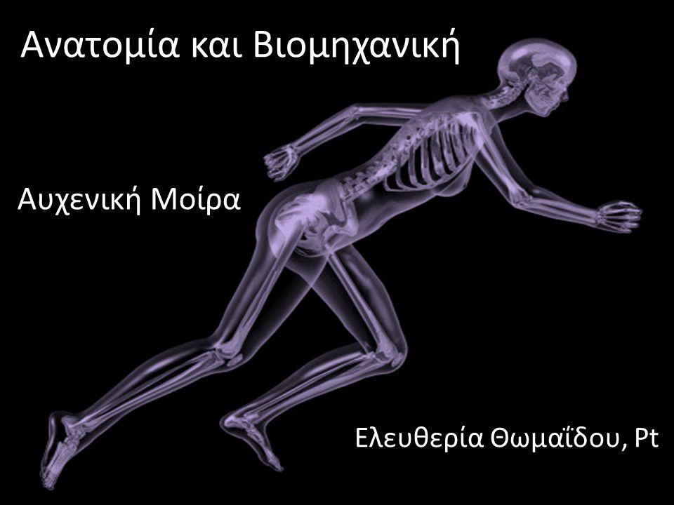 dsfsf Ανατομία και Βιομηχανική Ελευθερία Θωμαΐδου, Pt Αυχενική Μοίρα
