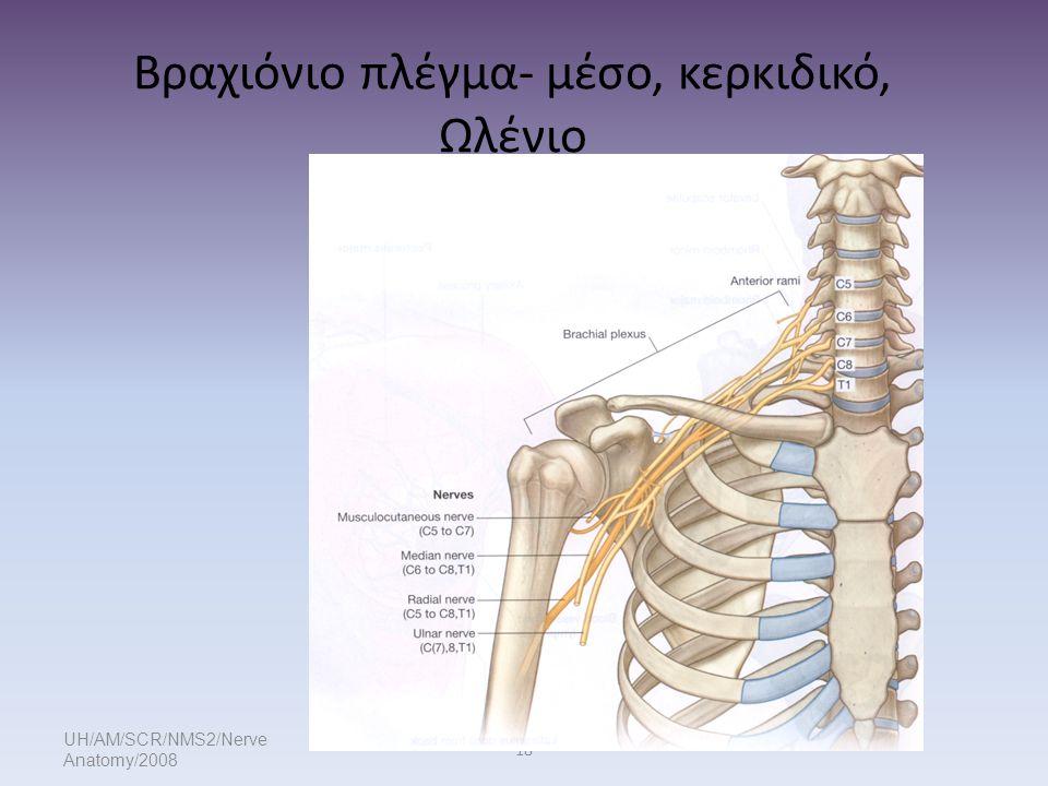 UH/AM/SCR/NMS2/Nerve Anatomy/2008 18 Βραχιόνιο πλέγμα- μέσο, κερκιδικό, Ωλένιο