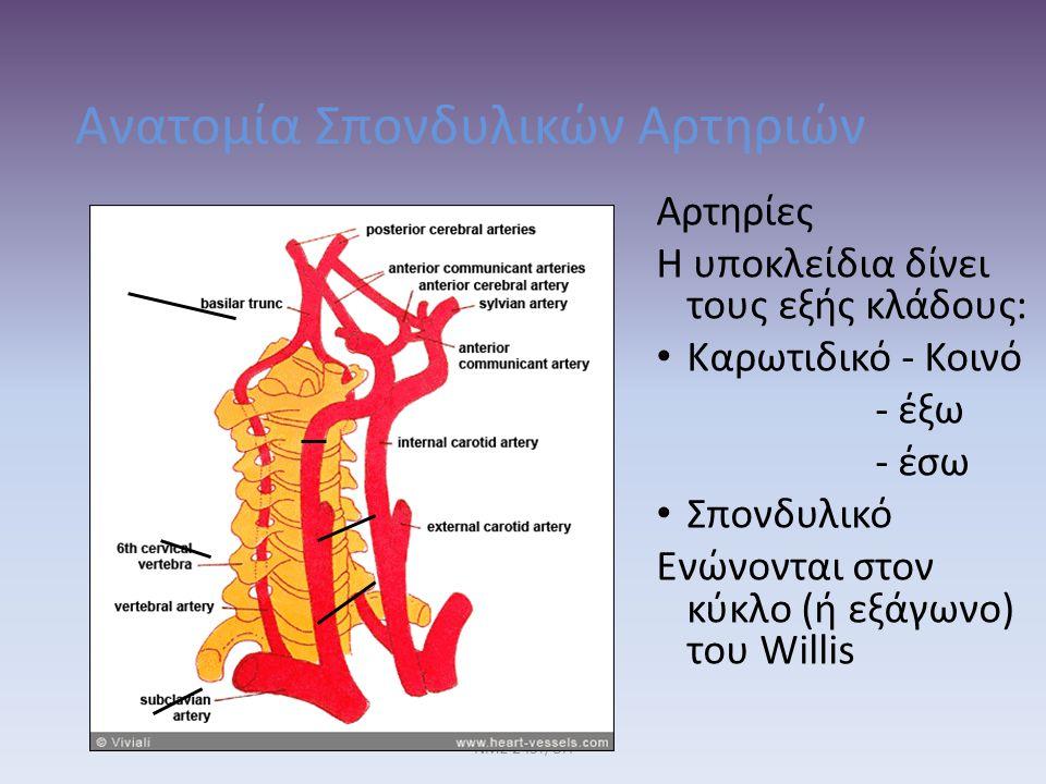 Ανατομία Σπονδυλικών Αρτηριών Αρτηρίες Η υποκλείδια δίνει τους εξής κλάδους: Καρωτιδικό - Κοινό - έξω - έσω Σπονδυλικό Ενώνονται στον κύκλο (ή εξάγωνο