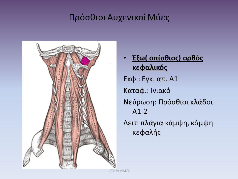 Πρόσθιοι Αυχενικοί Μύες Έξω( οπίσθιος) ορθός κεφαλικός Εκφ.: Εγκ. απ. Α1 Καταφ.: Ινιακό Νεύρωση: Πρόσθιοι κλάδοι Α1-2 Λειτ: πλάγια κάμψη, κάμψη κεφαλή
