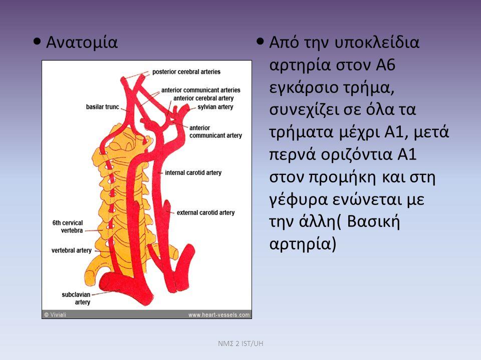 Ανατομία Σπονδυλικών Αρτηριών Η βασική αρτηρία αιματώνει: Προμήκη, παρεγκεφαλίδα, αιθουσαίο σύστημα ΝΜΣ 2 IST/UH