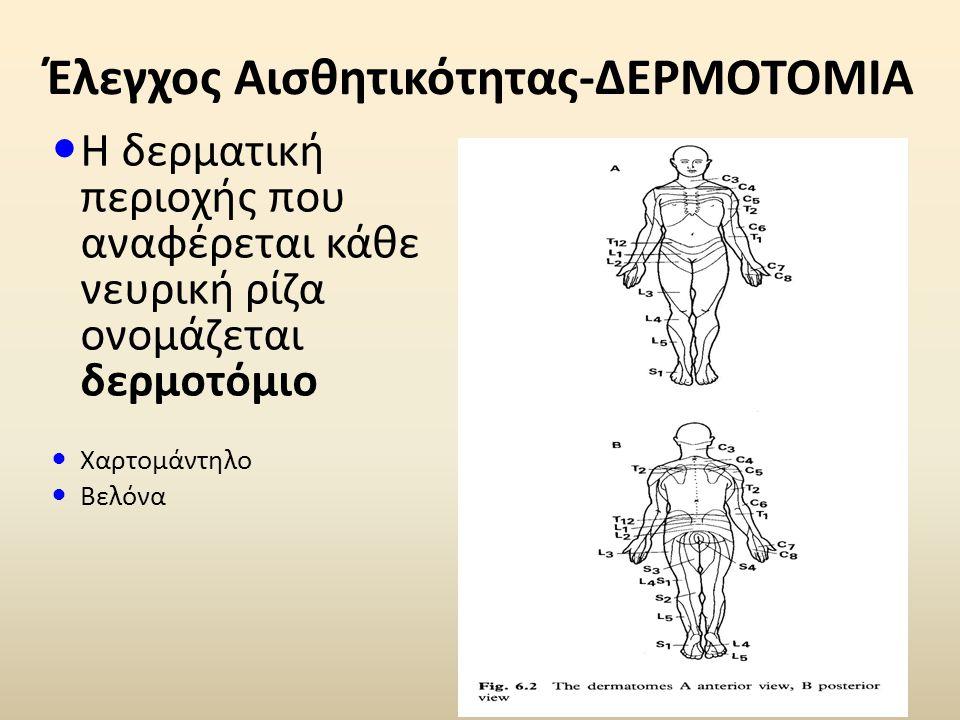 Έλεγχος Αισθητικότητας-ΔΕΡΜΟΤΟΜΙΑ Η δερματική περιοχής που αναφέρεται κάθε νευρική ρίζα ονομάζεται δερμοτόμιο Χαρτομάντηλο Βελόνα