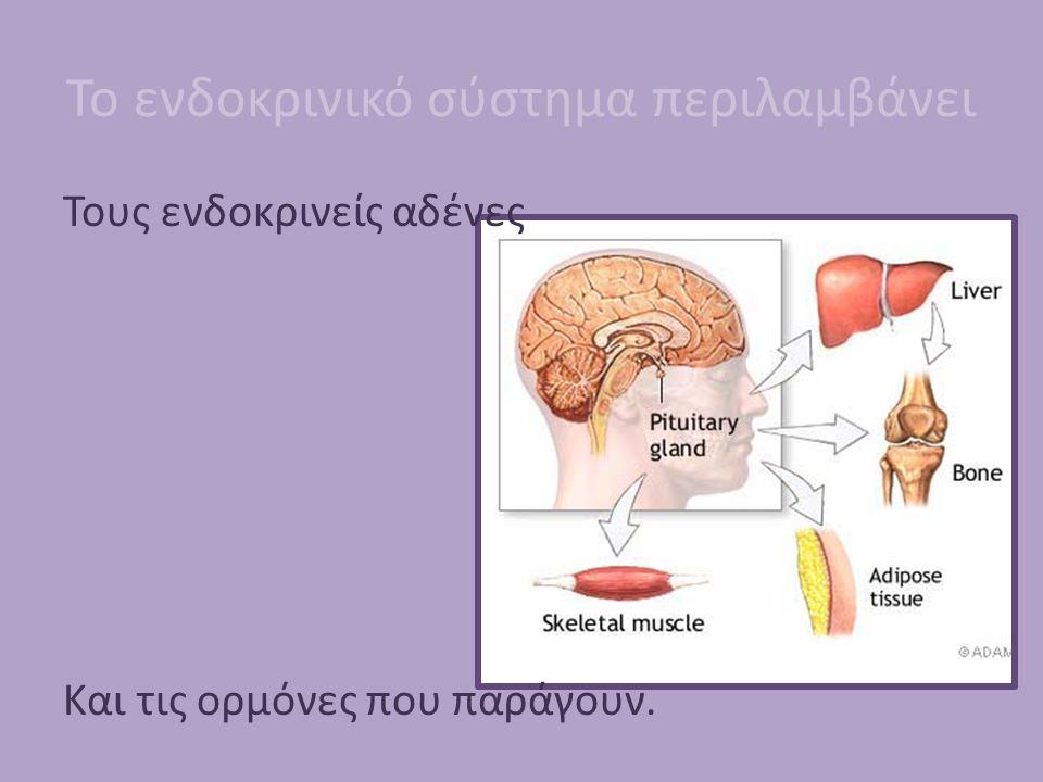 Το ενδοκρινικό σύστημα περιλαμβάνει Τους ενδοκρινείς αδένες Και τις ορμόνες που παράγουν.