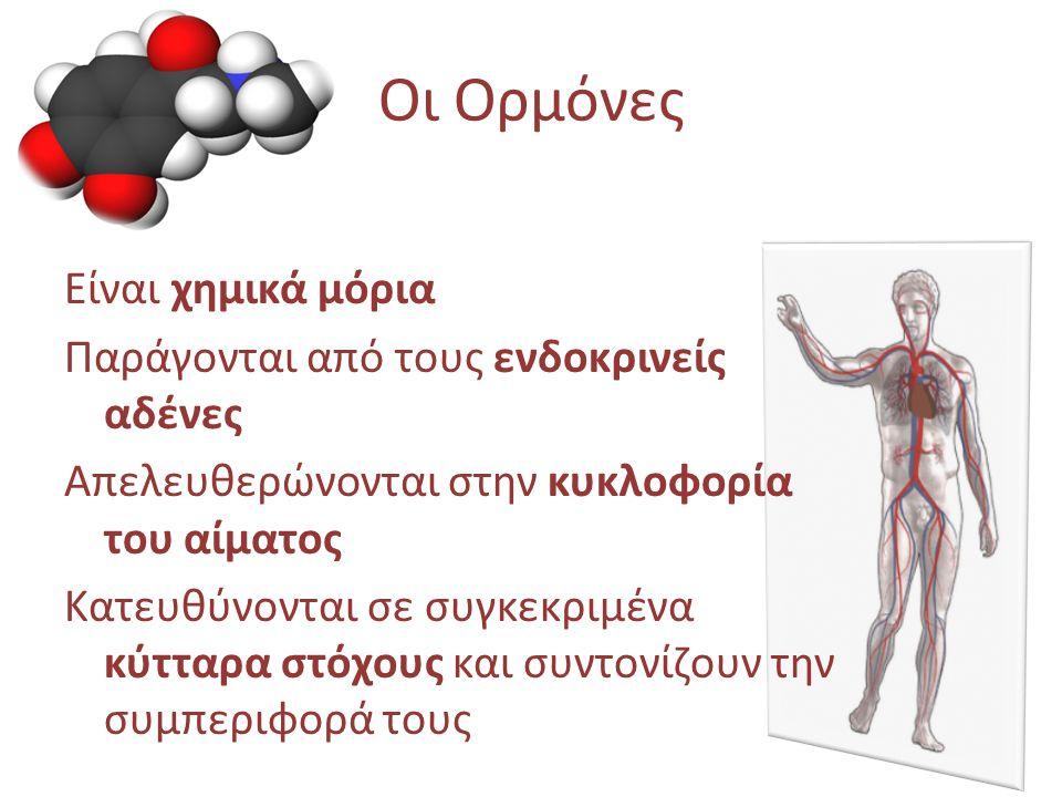 Οι Ορμόνες Είναι χημικά μόρια Παράγονται από τους ενδοκρινείς αδένες Απελευθερώνονται στην κυκλοφορία του αίματος Κατευθύνονται σε συγκεκριμένα κύτταρ