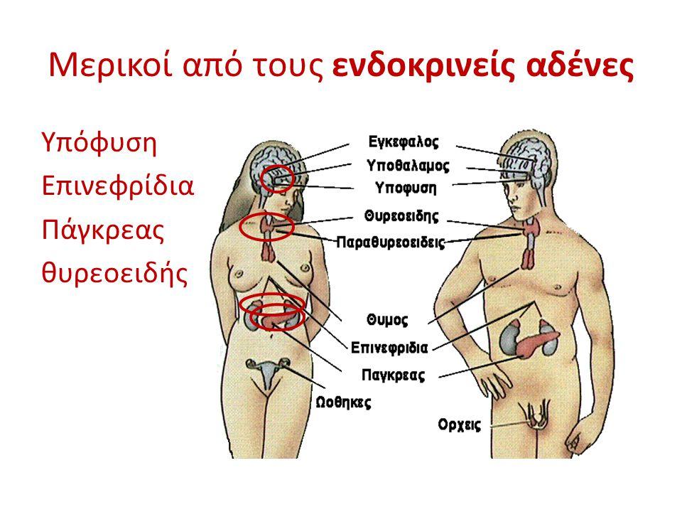 Μερικοί από τους ενδοκρινείς αδένες Υπόφυση Επινεφρίδια Πάγκρεας θυρεοειδής