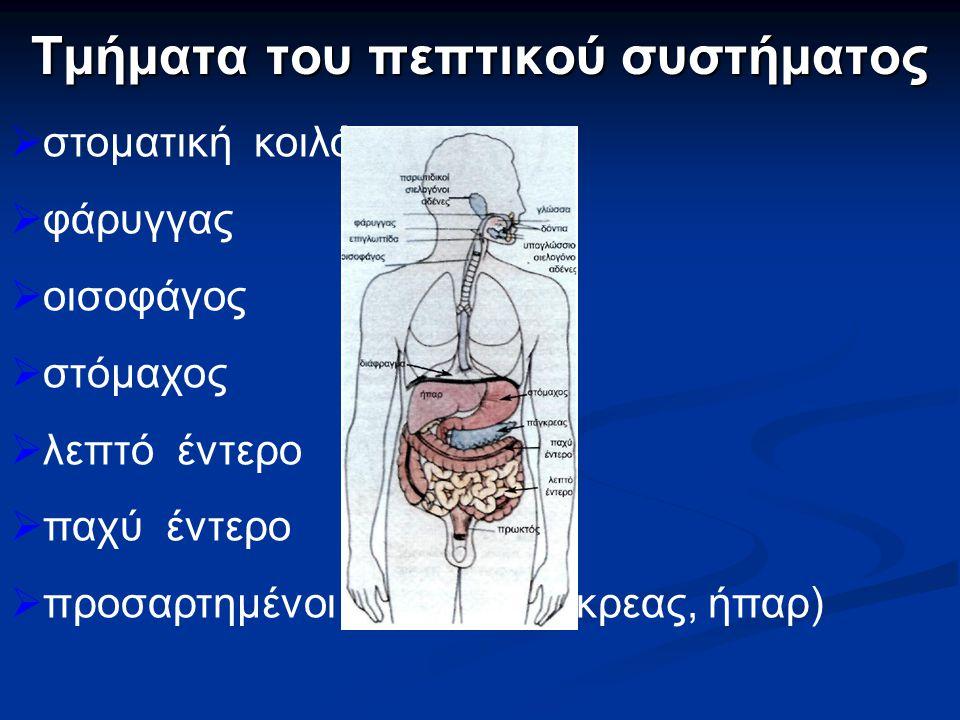 Τμήματα του πεπτικού συστήματος  στοματική κοιλότητα  φάρυγγας  οισοφάγος  στόμαχος  λεπτό έντερο  παχύ έντερο  προσαρτημένοι αδένες( πάγκρεας, ήπαρ)