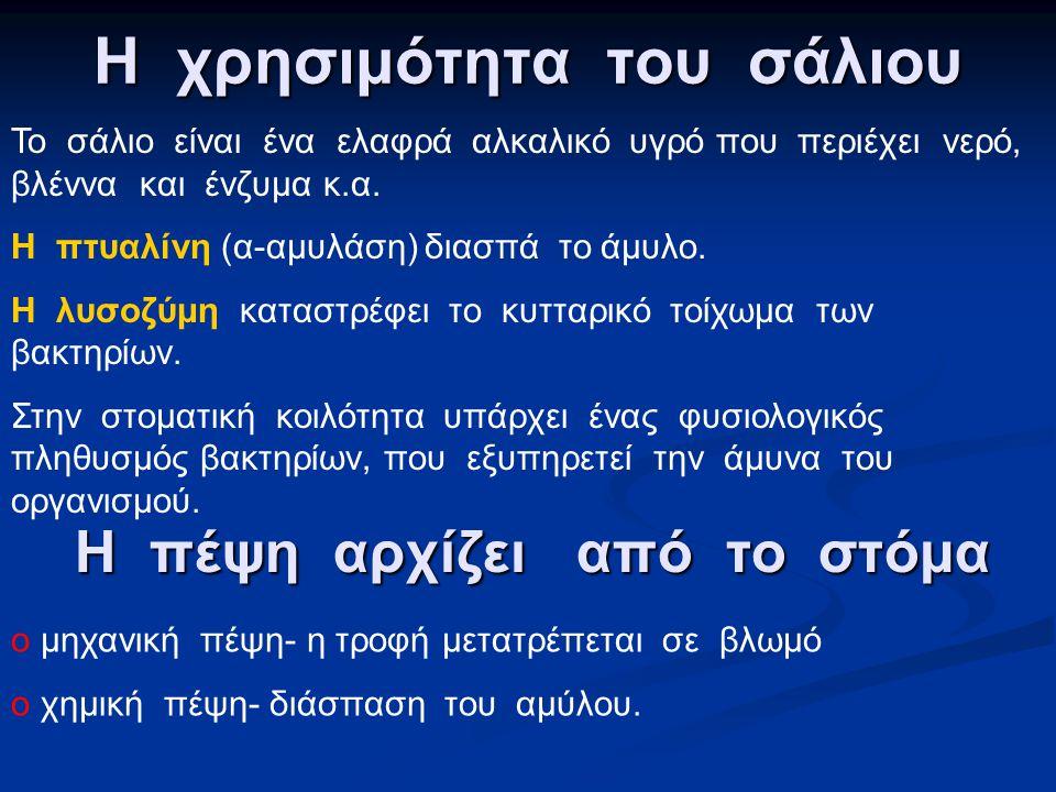 Στοματική κοιλότητα αμυγδαλές κρεατάκια Ουρανίσκος (υπερώα) Αμυγδαλές Σταφυλή Γλώσσα Δόντια/ φατνία Σιελογόνοι αδένες.