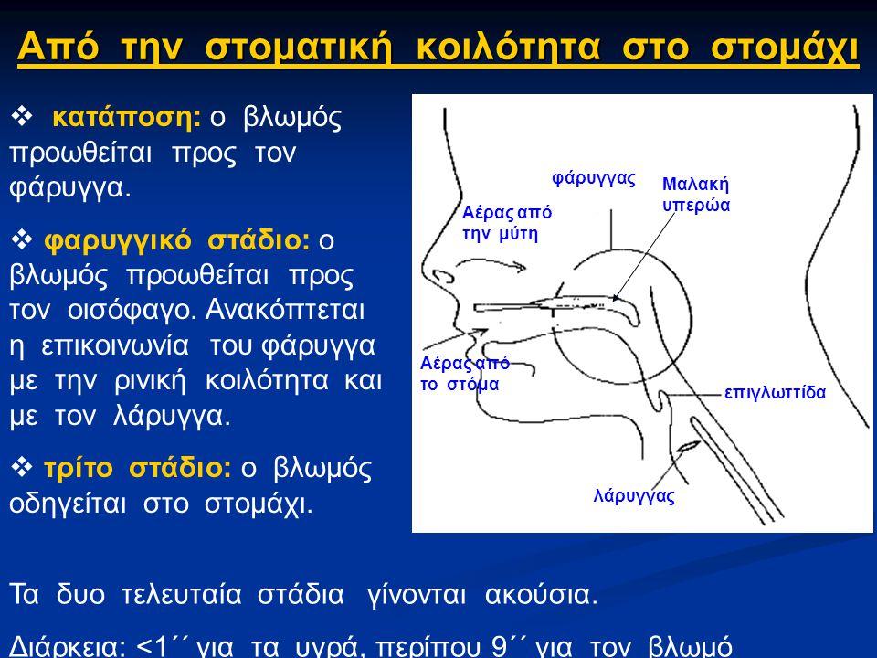 Από την στοματική κοιλότητα στο στομάχι Από την στοματική κοιλότητα στο στομάχι φάρυγγας λάρυγγας επιγλωττίδα Αέρας από το στόμα Αέρας από την μύτη Μαλακή υπερώα  κατάποση: ο βλωμός προωθείται προς τον φάρυγγα.